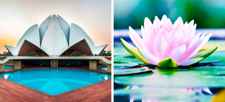 Lotus Temple in New Delhi