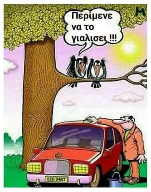 birds-car