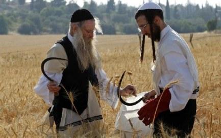 Orthodox Jews settlers farmers