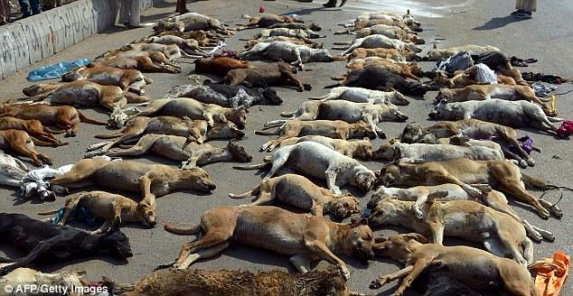 Pakistan-mass murder of dogs
