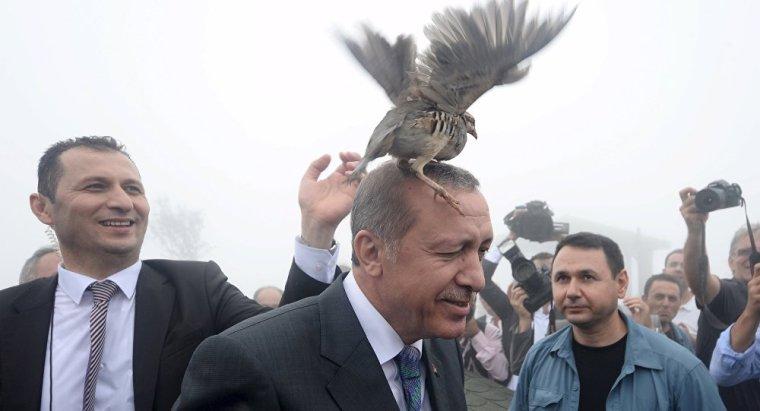 erdogan-pigeon-on-head