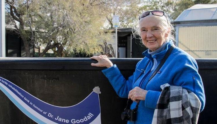 jane-goodall-whales